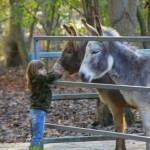 Attività assistita con gli animali