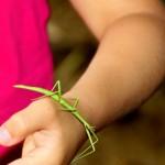 Conosciamo piante e animali