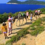 Escursione Ischia